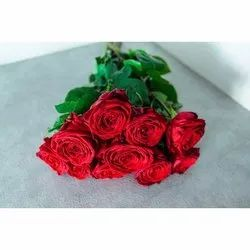 Red Rose Cut Flower, Size: 12 Inches, Packaging Size: 10 Piece