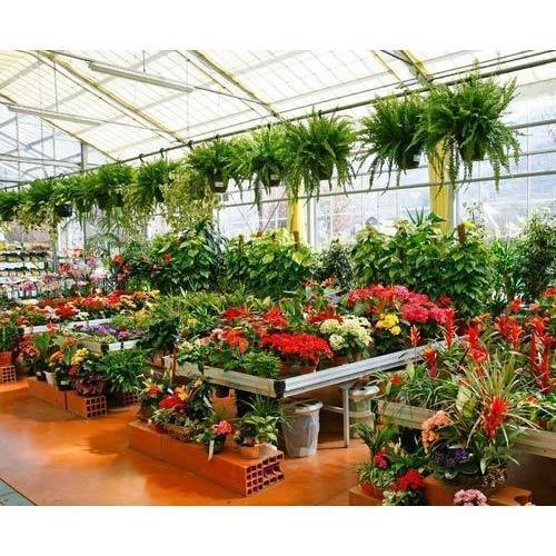 Plant Nursery Whole Supplier From Pune