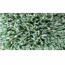 Mat M-8 Artificial  Wall Grass