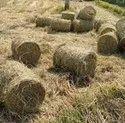 paddy straw bales