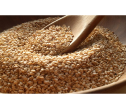 Surendraray & Co White Sesame Seeds, Pack Size: 25, 50 Kg