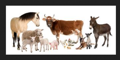 Farm Animals Flash Cards - View Specifications & Details of