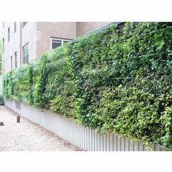 Green Wall Installation Service