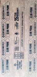 Century Bond 12 mm 710 Plywood