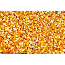 Yellow Maize Granules