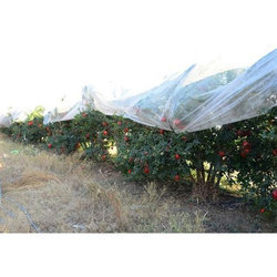 Pomegranate Crop Cover
