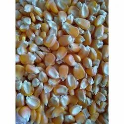 Dry Yellow Maize, For Cooking