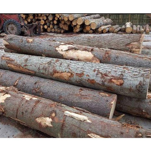Grey And Brown Colombia Teak Wood Logs, Rs 2000 /cubic feet Sri Ganesh Timber Merchants