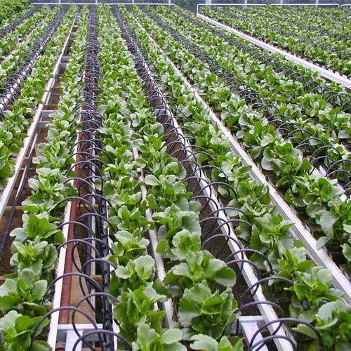 Elite Water Drip Irrigation System Rs 1100 Bundle Elite