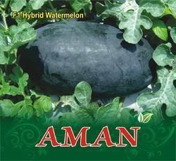 Aman F-1 Hybrid Watermelon Seed