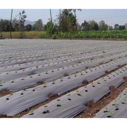 Biodegradable Black Color Mulch Film