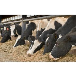 Cattle And Poultry Feed (Animal Feed) Project Report Consultancy