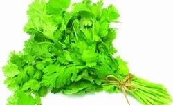 Green Coriander Leaf