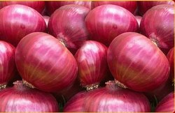 Reasonable Rate Fresh Onion, 50 kg
