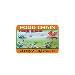 Model Of Food Chain