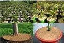 Coir Garden 8 Inch Coir Mulch Mat