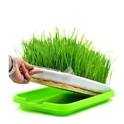 Seedling Dish (141-1)
