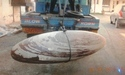 Marble Decorative Narmada Shiva Lingam