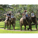 Elephant Safari Tour Package