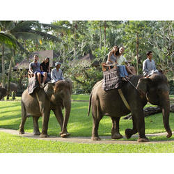 Elephant Safari Tour Package