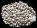 Moringa Oleifera Seed Kernel