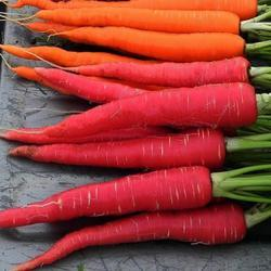 Red Carrot, Packaging: Box