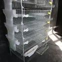 Quail Layer Metal Cage