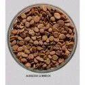 Shirish Seed