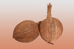 Fresh Semi Husked Coconut Price