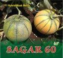 SAGAR 60 F-1 Hybrid Muskmelon Seed