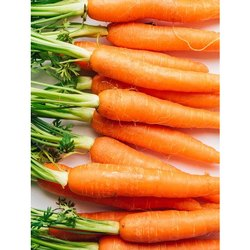 A Grade Fresh Healthy Carrots, Packaging Type: Carton, Packaging Size: 20 Kg