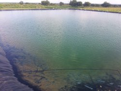 pond liner price