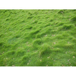 Natural Garden Carpet Grass