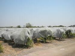 Agriculture Nonwoven Fabrics