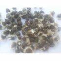 Natural Moringa Medicinal Seeds, Pack Size: Upto 50 Kg