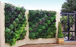 Vertical Garden & Green Walls