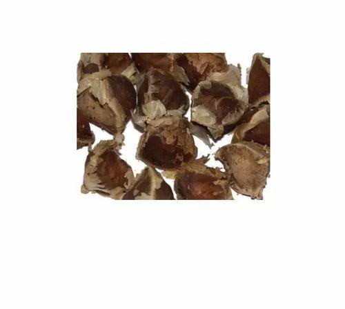 Moringa Pterygosperma (M.Olifera)