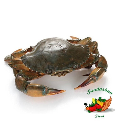 Sundarbans Mud Crab At Lowest Price Ever,bulk Order Only
