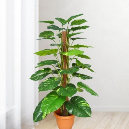 Artificial Money Plant Real Toch 4