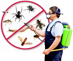 Monthly Commercial Pest Management Services, Delhi