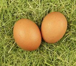 家禽健康的棕色鸡蛋,包装类型:蛋托盘