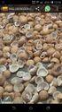 Milling Special Coconut Copra