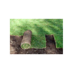 Natural Lawn Making Service, Mumbai, Coverage Area: 3000 to 10000 Square Feet
