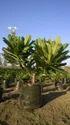 Ornamental Garden Plant