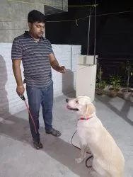 Dog Trainer Dog Trainers, 08 Am To 08 Pm