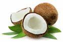 Coconut Fresh & Organic Large