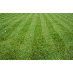 Green Lawn Grass, For Lawn Grass