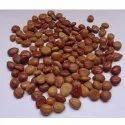 Cassia Fistula Seed