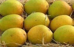 Ratnagiri Organic Alphonso Mango