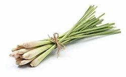 Lemongrass Medicinal Plant, Packaging Type: Bag